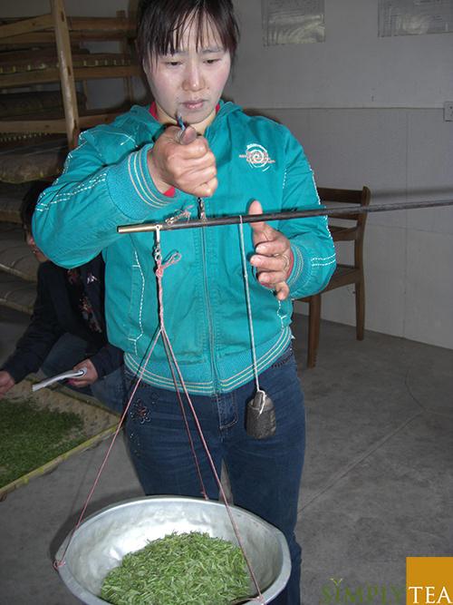 vejning af friskplukket grøn te